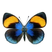 Бабочка. Давид Самойлов
