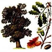 Trees. Деревья