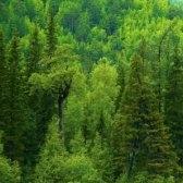 Голос в лесу. Самуил Маршак