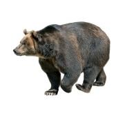 Медведь, Енот, Ёж и Мышь.