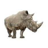 Животные: черепаха, тигр, носорог, кенгуру ...
