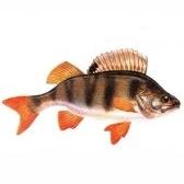 Рыбы. Fische. Часть 1