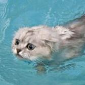 Swim, spin, spring, stink, shrink