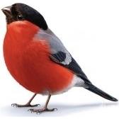 Pájaros. Птички