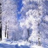 Опять зима. Александр Твардовский