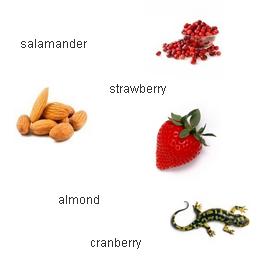 Суперпамять. Ягоды. Орехи. Амфибии