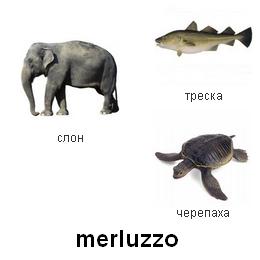 Вспомни где. Животные. Рыбы
