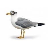 gabbiano - чайка