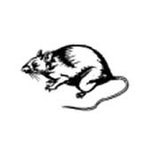 rotta - крыса