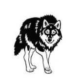 susi - волк