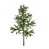puu - дерево