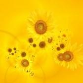 giallo - жёлтый