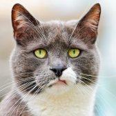 rabia - раздражение, досада, обида, злость
