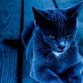 indigo - сине-фиолетовый