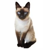 cat - кошка