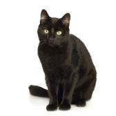 Удивительная кошка. Хармс Д.И.