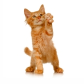 kitten - котёнок