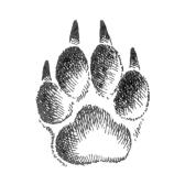 Части тела животных