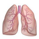 pulmón - легкое