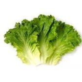 lettuce - листовой салат