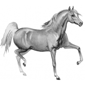 caballo - лошадь