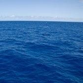 ocean - океан