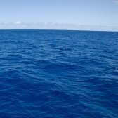 océano - океан