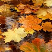 Уж небо осенью дышало. Пушкин А.С.
