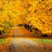 autunno - осень