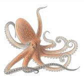 piovra - осьминог