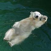 Ciao - Привет. Пока.