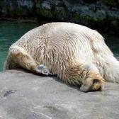 Monday - понедельник