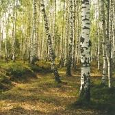 Ecología y medio ambiente: Устные темы. Historia y Geografía.