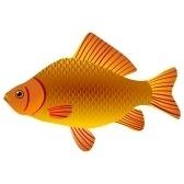 fish - рыба