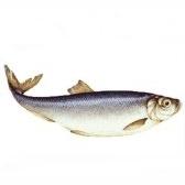 Fish and seafood. Рыба и морепродукты