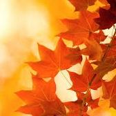Некрасов Н.А. Славная осень