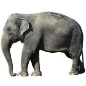 elefantti - слон