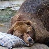 Почему животные впадают в спячку?