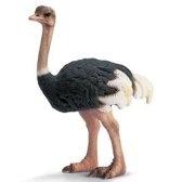 struzzo - страус