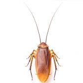 cucaracha - таракан