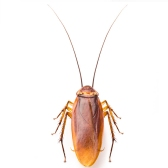 scarafaggio - таракан