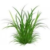 heinä - трава