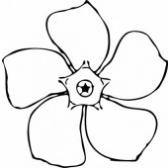 kukka - цветок