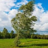 tuuli - ветер