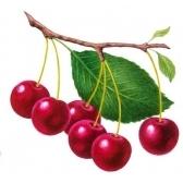 kirsikka - вишня