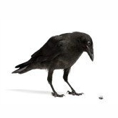 Птицы — Uccelli. Parte 1