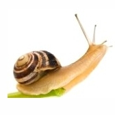 snail - улитка