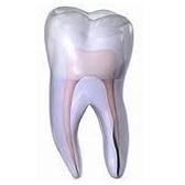 tooth - зуб