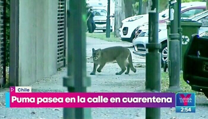 Карантин в Чили